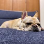 「犬飼いあるある」に関するアンケートvol.09