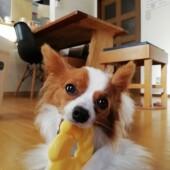 犬の行動に関するアンケートvol.03
