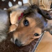 犬の食器に関するアンケート