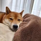 犬の引っ越しに関するアンケートvol.01