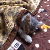 猫のトラブルに関するアンケートvol.02