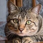 猫の爪とぎに関するアンケート