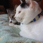 猫の飼育に関するアンケー ト