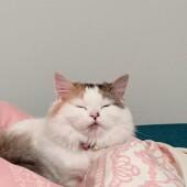 猫が絶対に反応する言葉に関するアンケートvol.01