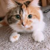 「猫飼いあるある」に関するアンケートvol.09