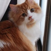猫の生態・行動に関するアンケートvol.05