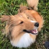 「犬飼いあるある」に関するアンケートvol.16