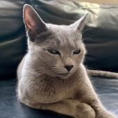 猫の生態・行動に関するアンケートvol.06