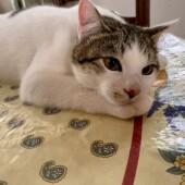 野良猫を家族に迎えた経験に関するアンケートvol.01