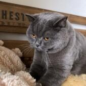 猫の名前に関するアンケートvol.03