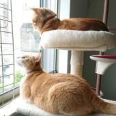 猫が反応する音に関するアンケートvol.01