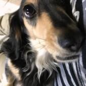 犬が反応する音に関するアンケートvol.01