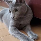 猫のおもちゃに関するアンケートvol.01