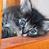 「猫飼いあるある」に関するアンケートvol.10