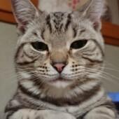 愛猫への後悔に関するアンケートvol.01
