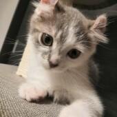 猫飼いさんが気になる猫に関するアンケートvol.01