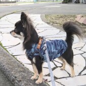 愛犬の気管虚脱に関するアンケート