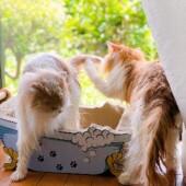 「猫は涼しいところを知っていると思う?」に関するアンケートvol.1