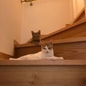 「猫飼いあるある」に関するアンケートvol.11