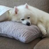 犬の外耳炎に関するアンケート