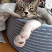 猫のケージに関するアンケート