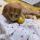 猫の可愛さに関するアンケートvol.1