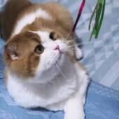 猫の行動に関するアンケートvol.03