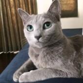 猫の生態・行動に関するアンケートvol.08