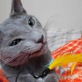 猫のための部屋掃除に関するアンケートvol.01